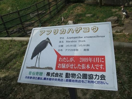 アフリカハゲコウ看板.jpg