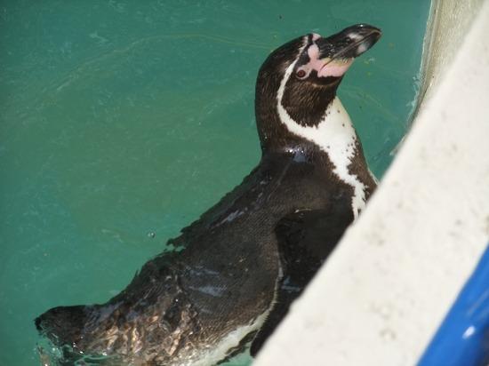 ペンギン3.jpg